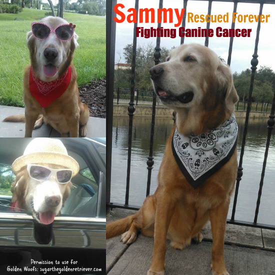 Sammy Rescued Forever, Fighting Canine Cancer