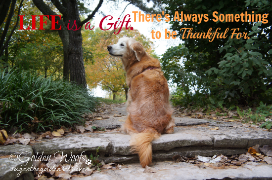Life is a gift. There's always something to be thankful for.