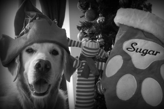 Sugar, Santa's Dog Elf