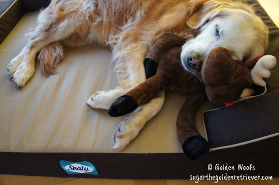 Sugar n Moose Toy on a Sealy Dog Bed