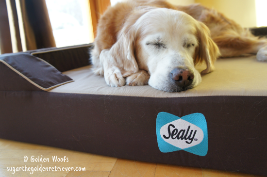 Sugar Napping on a Sealy Bed