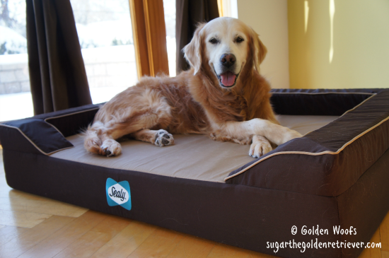 "Sugar on a Sealy ""Bella"" Dog Bed"
