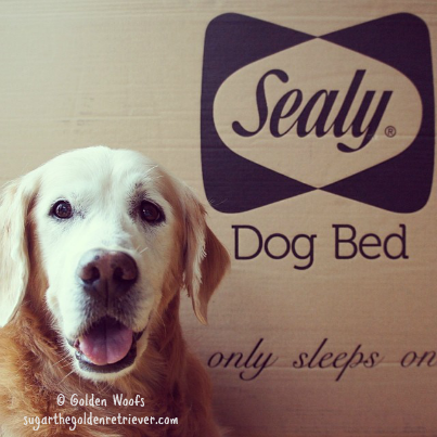 Surprise NEW Sealy Dog Bed