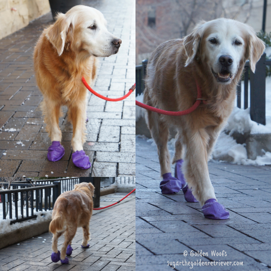 Sugar Wears PawZ Dog Boots
