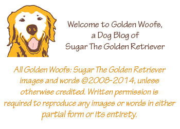 Golden Woofs Welcome Badge
