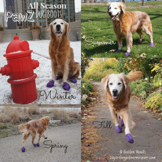 pawz_allseason_dogboots