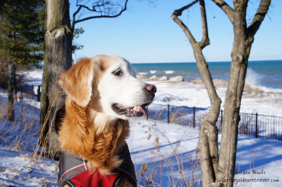 #RecipeForMoments w/ my DOG Sugar The Golden Retriever