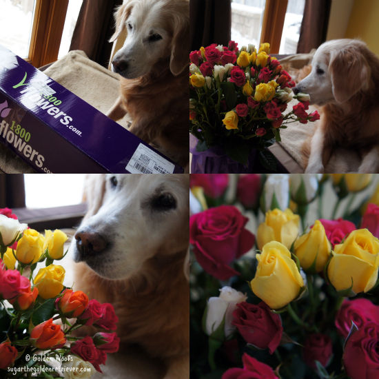 Sugar's Get Well Flowers from Chewy.com