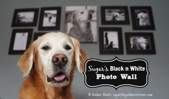 Sugar's Black n White Photo Wall