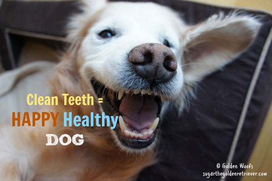 Clean Teeth = Happy DOG