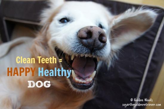 Clean Teeth = Happy DOG