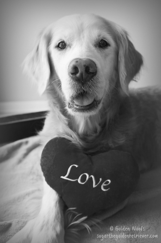 Love Is My Dog