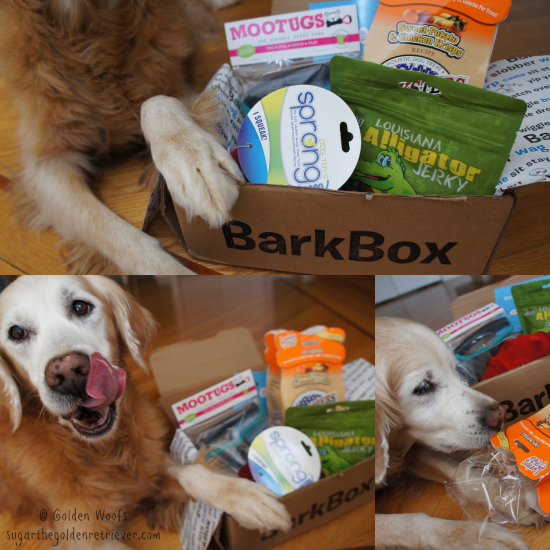 Sugar's January BarkBox