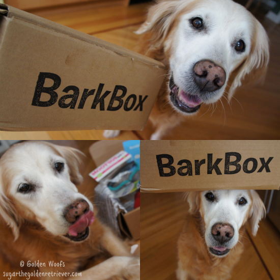 Sugar, B For BarkBox