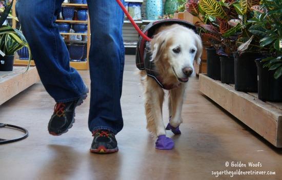 Indoor dog-friendly Garden Center