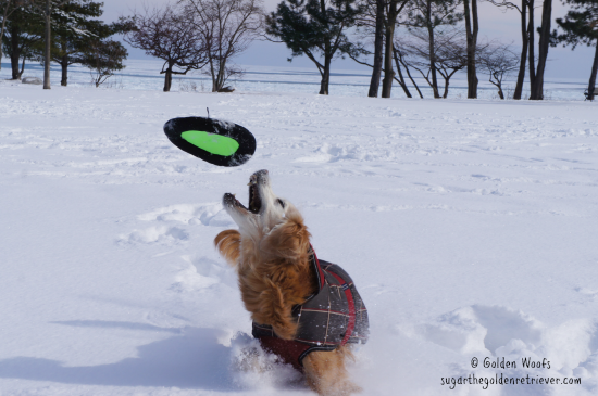 5 Ways To Keep Your Dog Active During Winter