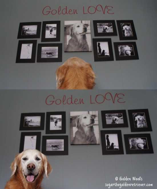 Sugar's Golden LOVE Photo Wall