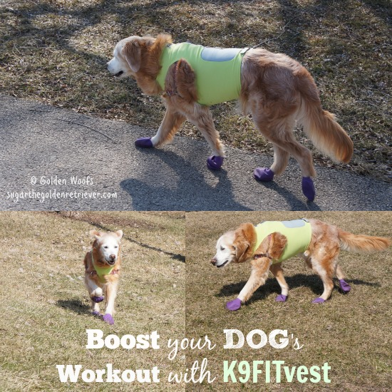 Boost Your Dog Workout with K9FITvest