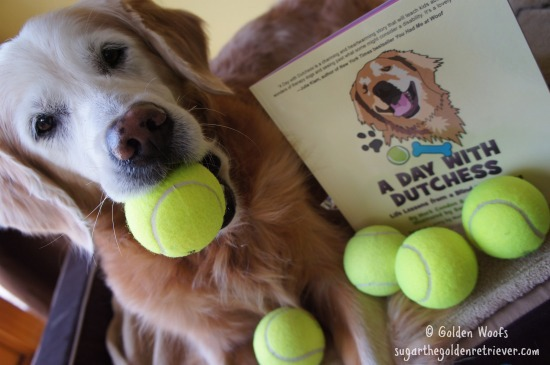 Dutchess Therapy Dog Loves Tennis Balls