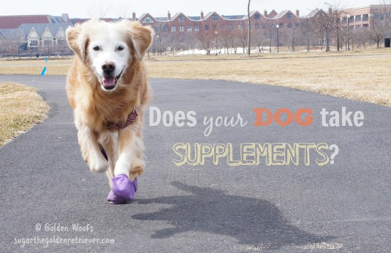 Does Your DOG Take Supplements?