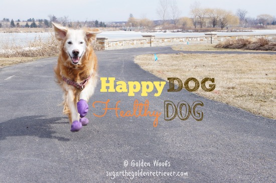 Happy DOG = Healthy DOG