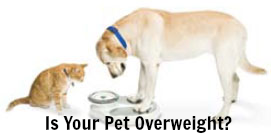Is Your Pet Overweight? #HillsPet Metabolic To The Rescue
