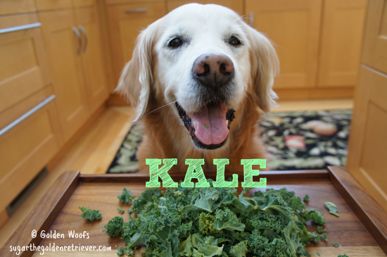 Kale and Dogs