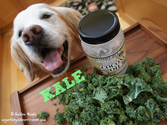 Kale Coconut Oil and Dogs