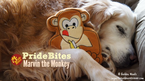 Marvin The Monkey from PrideBites