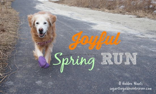 Joyful Spring RUN