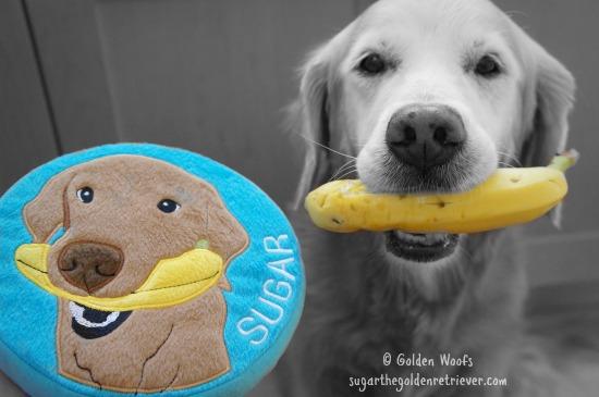 Sugar's Banana SMILE Dog Toy