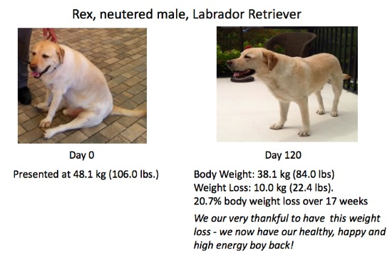 REX Weight Loss Success w/ Hills Metabolic
