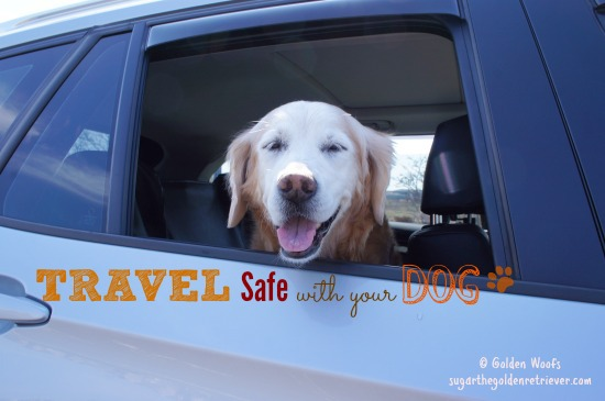 Travel Safety With Your Dog
