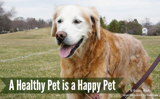 A Healthy Pet is a Happy Pet