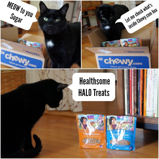 Maynard chewy.com Halo Cat Treats