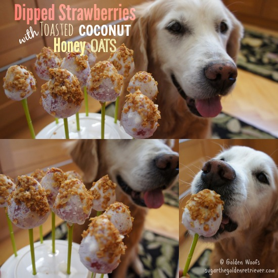 Dipped Strawberries with Toasted Coconut Honey Oats