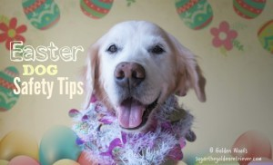 Easter DOG Safety Tips