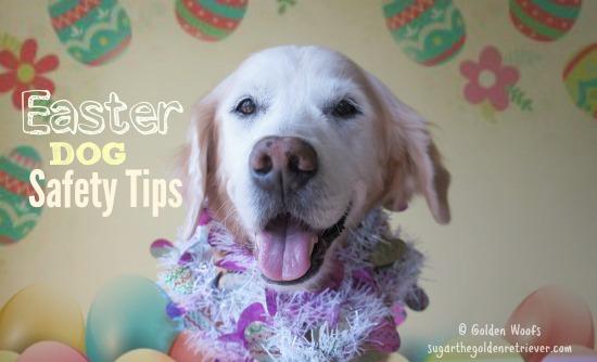 Easter DOG Safety Tips