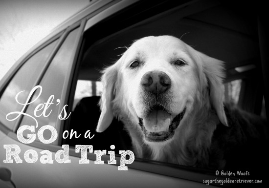 Let's GO on a Road Trip