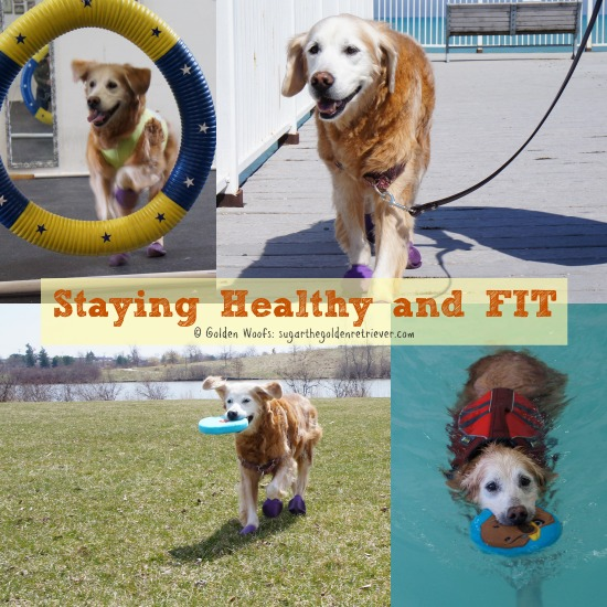 Senior DOG Staying Healthy and Fit