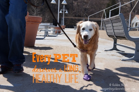 Every Pet Deserves a LONG, Healthy LIFE