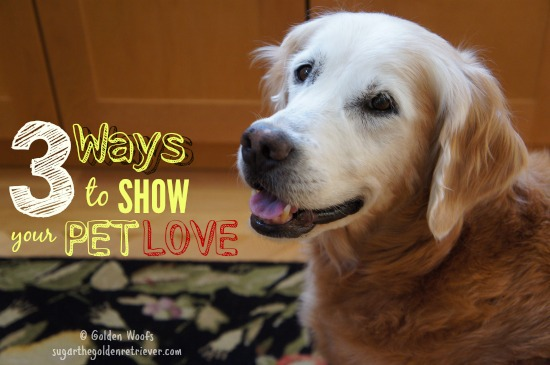 3 Ways To Show Your Pet Love