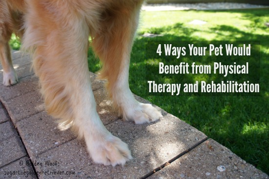 4 Ways Your Pet Would Benefit from PT & Rehabilitation