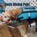 Pool Dock Diving Safety Tips