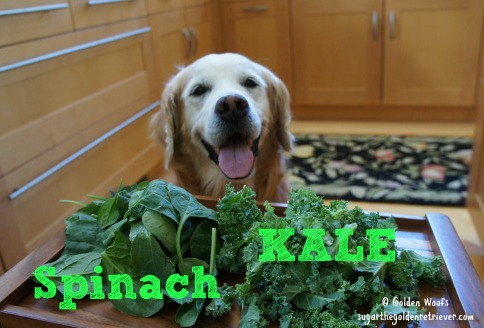 Can Dogs Eat Spinach and Kale?