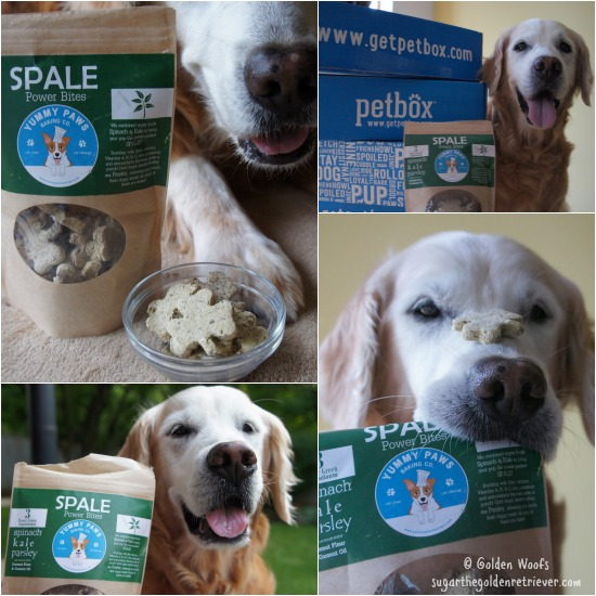 SPALE Yummy Paws June PetBox