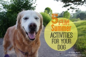 5 Summer Activities For Your Dog
