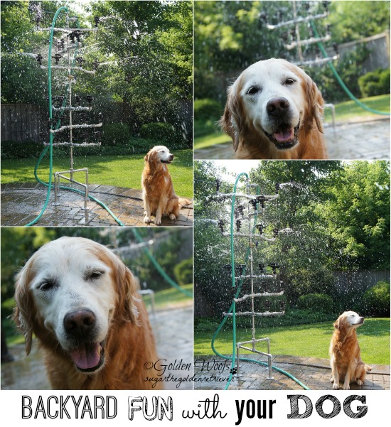 Backyard FUN with your DOG