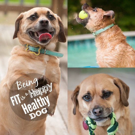 Being FIT is a HAPPY Healthy DOG #HillsPet