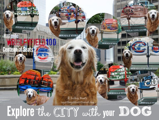 Explore The CITY with your DOG